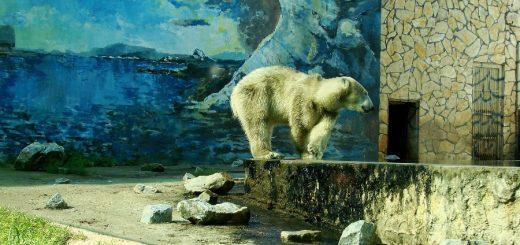 Zoo w Nyíregyházie
