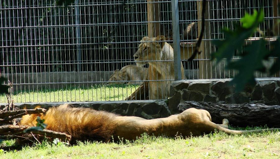 zoo lew