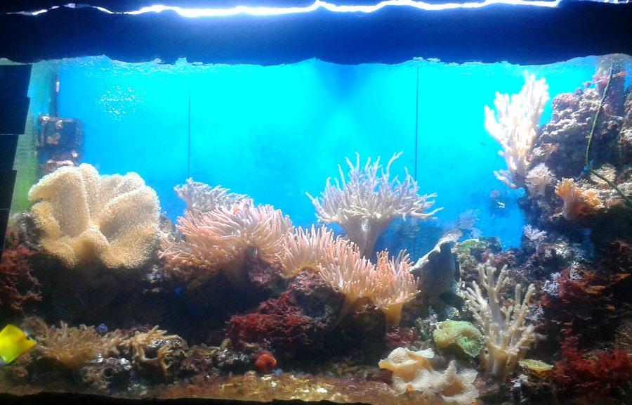 Oceanarium w zoo