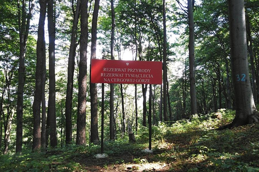 Rezerwat Przyrody Tysiąclecia na Górze Cergowej